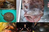 """""""Điểm mặt"""" những con cá khổng lồ gây sốt đầu năm 2017"""