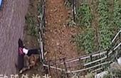 TQ: Kinh hoàng cảnh bé gái bị bầy chó tấn công trên đường đi học về