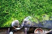 Bức ảnh rau muống Việt Nam được báo Anh bình chọn đẹp nhất tháng
