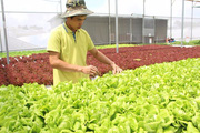 """Mô hình trồng rau thủy canh cho thu nhập """"khủng"""" của chàng Thạc sĩ lịch sử"""