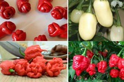 Những loại ớt có hình thù độc lạ nhất thế giới