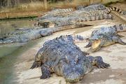 Trùm cá sấu Việt Nam, người chinh phục 5 vạn 'sát thủ đầm lầy'
