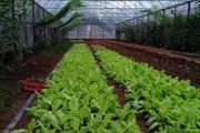 Cặp vợ chồng bỏ việc, bán nhà phố về quê trồng rau sạch