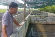 Trồng nấm, nuôi ếch lão nông Nam Định thành tỉ phú