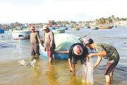 """Mùa cá đối - """"lộc biển"""" ở La Gàn"""