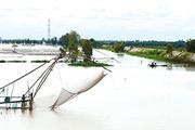 Rộn ràng mùa cá trên sông ở Miền Tây