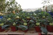 Khu vườn trồng cây trên sân thượng hiếm có ở Hà Nội