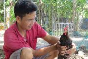 Thêm lợi nhuận nhờ chữa bệnh cho gà bằng thuốc nam