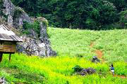 """Một ngày """"picnic"""" trong rừng thông bản Áng"""