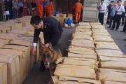 Clip: Chó nghiệp vụ quần thảo kiểm tra lô hàng chứa lá Khat cực độc