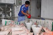 Agribank Hà Giang: Gần 90% vốn dành cho tam nông