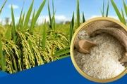 """Đột phá 3 """"trụ cột"""" để phát triển lúa gạo bền vững"""