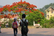 Ngỡ ngàng mùa hoa phượng đỏ