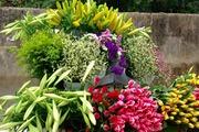 Hoa loa kèn chênh chao trong nắng gọi tháng 4