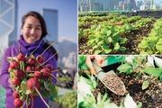 5 mô hình trang trại trồng rau trên sân thượng ưu việt nhất thế giới