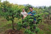 Tân Quang đi sau về trước trong xây dựng nông thôn mới