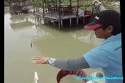 Những Màn Câu Cá Bá Đạo Nhất Quả Đất