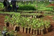 Giá nông sản hôm nay (16.7):  Hạt tiêu giảm sốc, cây giống cũng lao đao