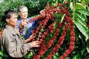 Giá nông sản hôm nay (31.7): Cà phê vượt lên ngưỡng 46.000 đồng/kg, tiêu quay đầu giảm mạnh