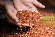 Sự thật chỉ ăn gạo lứt muối mè sẽ khỏi bệnhung thư?
