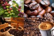 Giá nông sản hôm nay 24/9: Động lực nào đẩy giá cà phê thoát khỏi mức giá thấp kỷ lục?