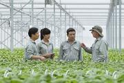 Ngành Trồng trọt: Tập trung canh tác cây trồng chất lượng