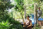 Làm vườn 3 tầng trồng cây Mật cật, tất bật bán cả lá lẫn cây
