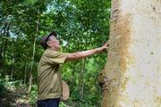 Chuyện về ông lão người Dao hơn 40 năm trồng khu rừng tiền tỷ