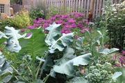 Khu vườn đầy rau xanh và trái ngọt của người phụ nữ bỏviệc giáo viên về làm vườn