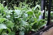 Máy làm vườn tự động, giải pháp tạo nguồn thực phẩm sạch cho dân thành phố