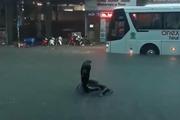 Sự thật rắn hổ mang chúa khổng lồ xuất hiện trên đường ngập nước ở Nha Trang