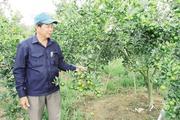 """Lão nông """"U60"""" xứ Quảng biến đất cằn thành trang trại"""