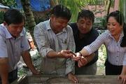 Nuôi lươn sinh sản hiệu quả trên vùng ngập lũ ở Tiền Giang