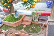 Ấn tượngquất bonsai tiểu cảnh làng quê bắc bộ sinh động ngày Tết