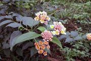 Hoa ngũ sắc trong vườn tháng Ba