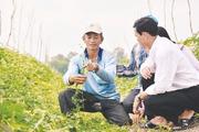 """Nắm """"bí quyết"""" trồng rau màu, lão nông thu gần 100 triệu đồng/năm"""