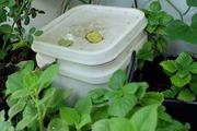 """Cách nuôi trùn quế bằng rác nhà bếp - """"bí quyết"""" chăm bón cho vườn rau sạch xanh tốt"""