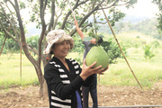 Giống bưởi da xanh - cây thoát nghèo của người dân vùng núi Ninh Thuận
