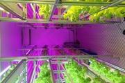 AgrHub đưa sản phẩm nông nghiệp sạch từ trang trại đến bàn ăn