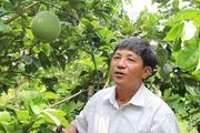 Xem clip cách lão nông Bình Chánh trồng bưởi da xanh thu tiền tỉ trên đất phèn