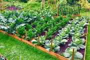 """""""Hot boy"""" làm vườn trồng rau như công viên, nuôi gà trong nhà gỗ đẹp như tranh"""