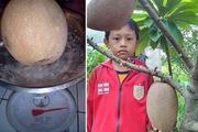 """Hồng xiêm ruột đỏ Thái Lan khổng lồ 2kg/quả gây """"sốt"""" thị trường Việt Nam"""