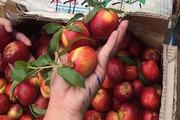 Những hoa quả Trung Quốc tràn ngập thị trường Việt, giá rẻ như bèo