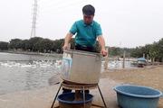 Nuôi vịt đẻ và thả cá cho thu 3 tỉ đồng/năm, lão nông đổi đời
