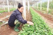 Thành phố Hòa Bình phát triển nông nghiệp tạo đà xây dựng nông thôn mới