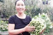 Trồng 5 ha rau VietGAP, thu 200 triệu đồng mỗi năm