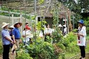 Du lịch nông nghiệp mở thêm hướng làm giàu của nông dân Việt Nam