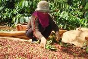 """Chuyên gia kinh tế """"mách nước"""" cho nông sản Việt"""