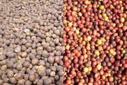 Giá cà phê tiếp tục đà giảm, tiêu ít biến động