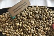 Giá cà phê thấp kỉ lục, Vicofa phải họp khẩn